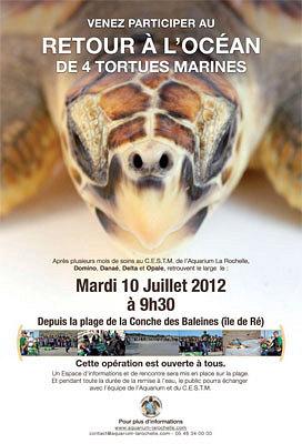illustration de Retour des tortues à l'océan sur l'île de Ré avec l'Aquarium de La Rochelle, mardi 10 juillet 2012