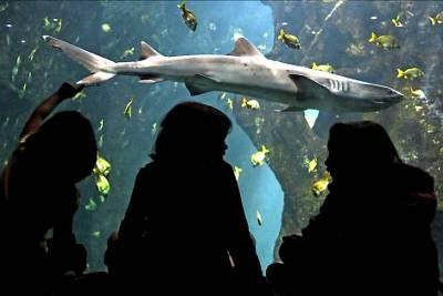 illustration de 300 enfants, invités privilégiés de l'Aquarium de La Rochelle, dimanche 19 août 2012