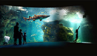 illustration de Aquarium de La Rochelle : idées cadeaux et la plongée du Père Noël le 25 décembre à 17h !