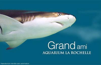 illustration de Idée week-end : l'Aquarium de La Rochelle est ouvert de 10h à 20h au mois de janvier 7j-7j !