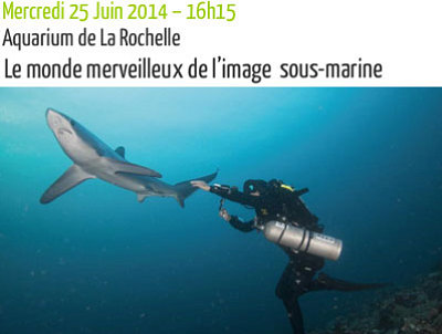 illustration de L'image sous marine : une rencontre Grand Ecran - Sunny Side of The Doc à l'Aquarium de La Rochelle, mercredi 25 juin 2014