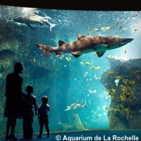 � Illustration : DR Aquarium de La Rochelle