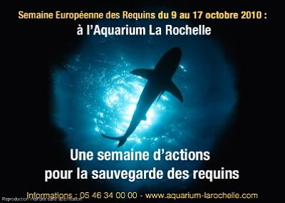 Photo : La Rochelle : Semaine européenne des requins à l'Aquarium 9-17 oct. 2010