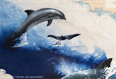 Photo : Aquarium de La Rochelle : dauphins, baleines et sentinelles de l'Atlantique, exposition 2013