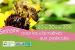 Photo : La Rochelle : une semaine pour les alternatives aux pesticides 20-30 mars 2011 ( cliquez pour agrandir cette image )