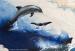 Photo : Aquarium de La Rochelle : dauphins, baleines et sentinelles de l'Atlantique, exposition 2013 ( cliquez pour agrandir cette image )